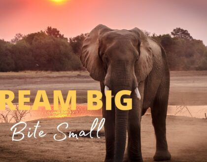Dream Big - bite small