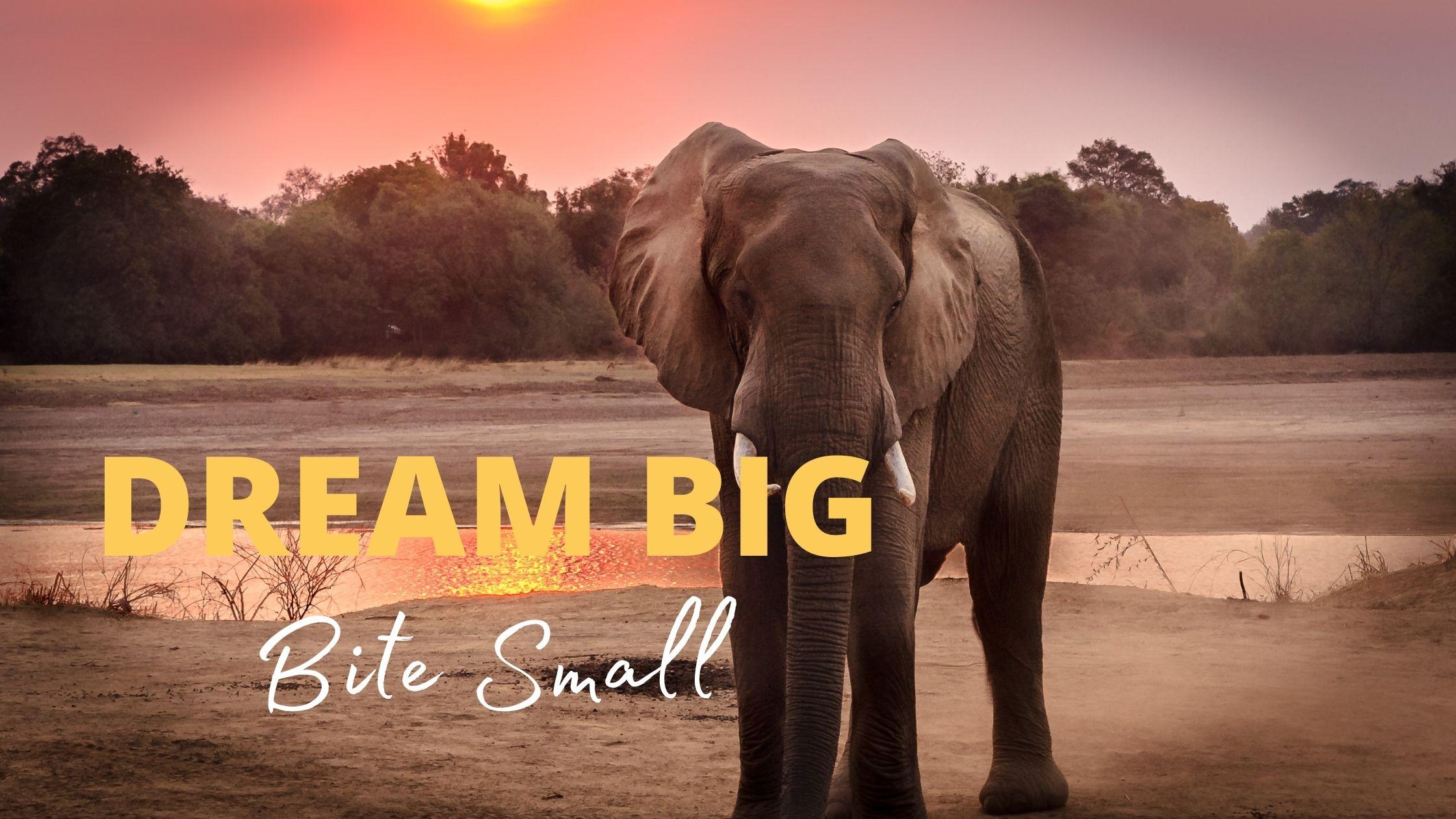 Dream Big - bite small